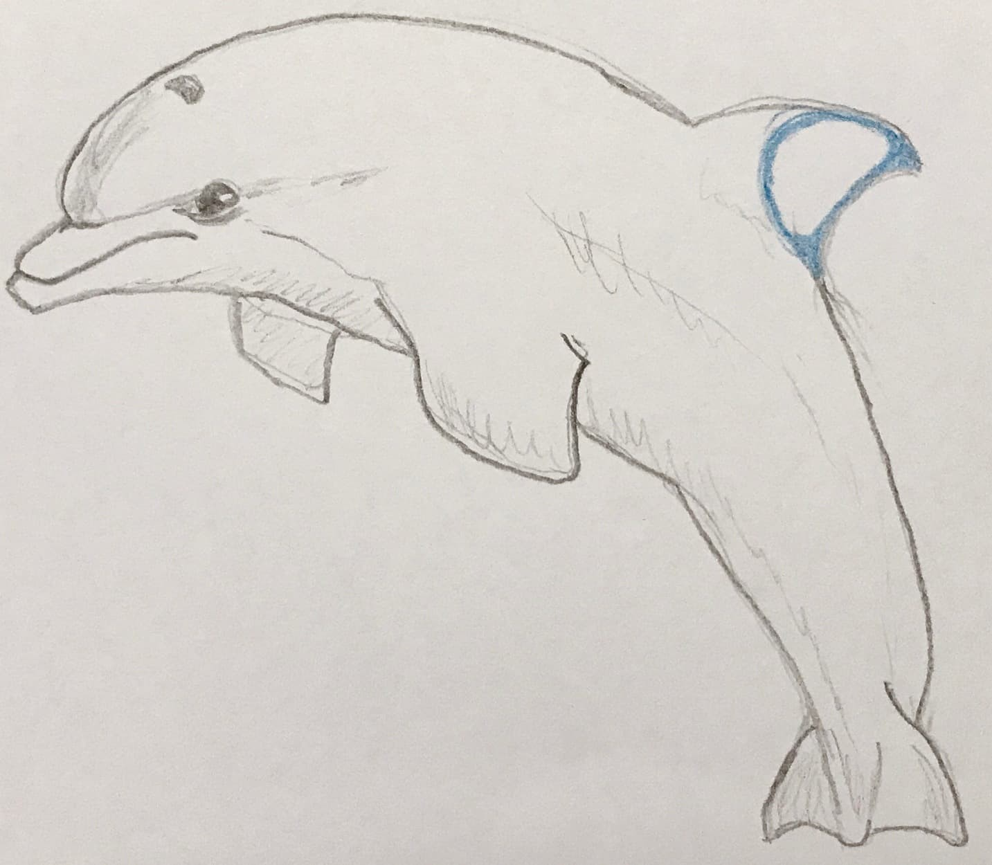Dolphin with D for dorsal (Fin)